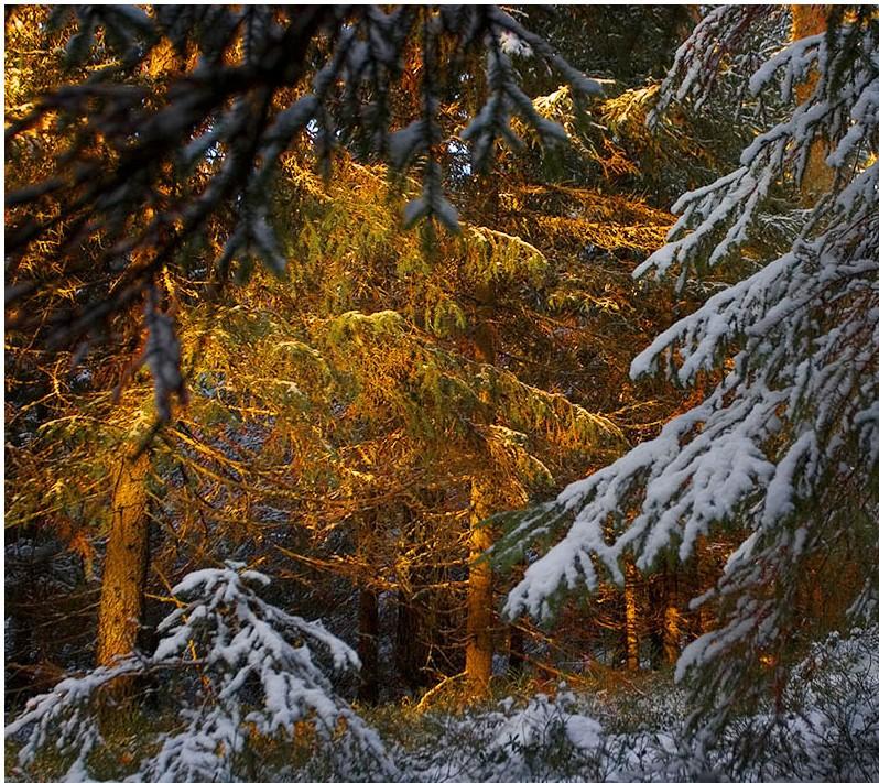 13-12-17.CAF.bosque.dorado.FOTO.ARBOL